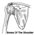 the_anatomy